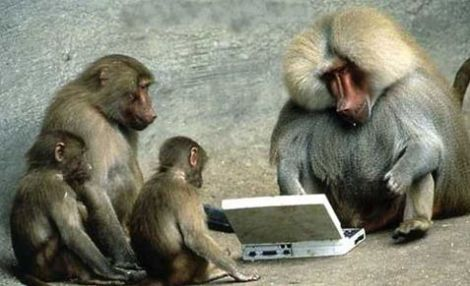 Funny-monkeys